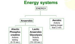 Diagram of human energy systems